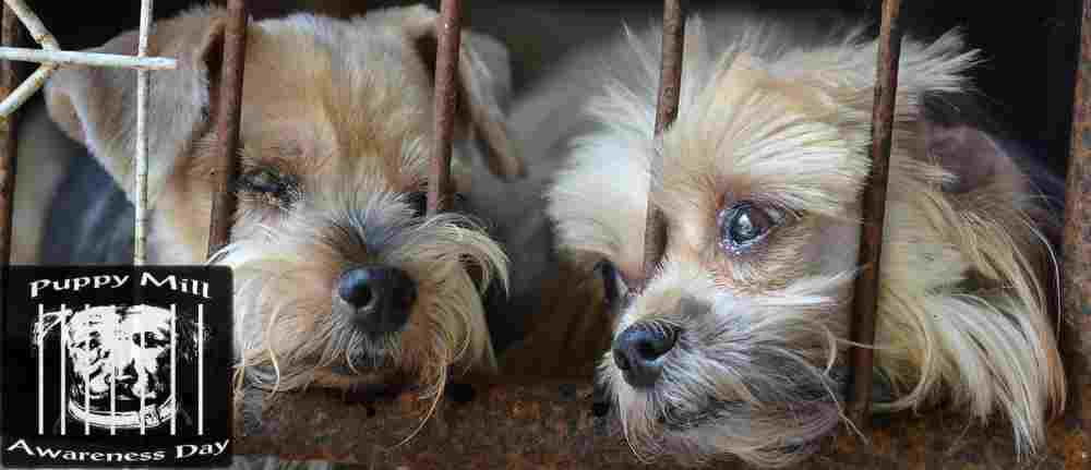 Google News Feed – Puppy Mill Awareness Day